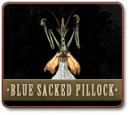 BLUE SACKED PILLOCK (MALE) - SIMPLETONICUS INDIGUM